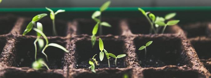 investering plantor